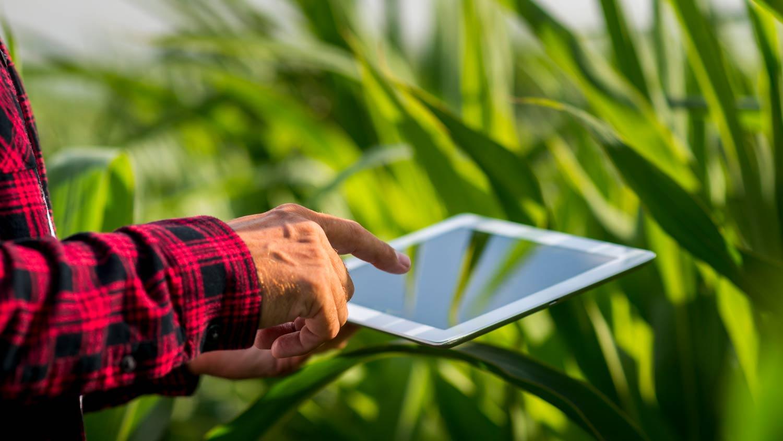 James Cisnandes, Head de Agribusiness, mostra o caminho das pedras para a Transformação Digital da Agroindústria.